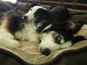 Kimberley-dogs-snuggling